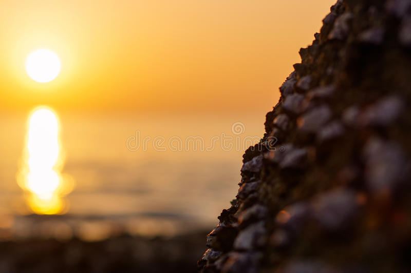 Blur colorful sunset background with shell on the rock closeup, abstract nature royalty free stock images