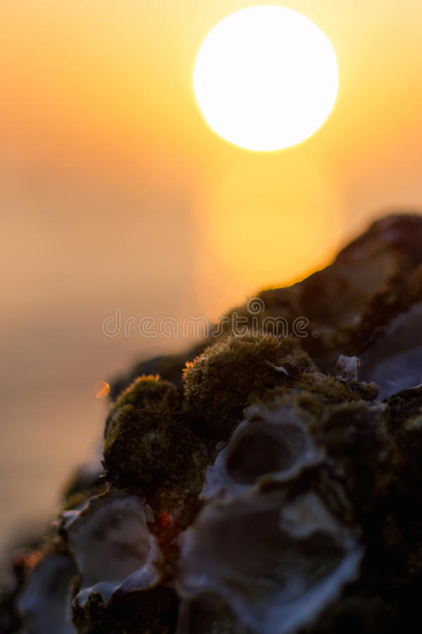 Blur colorful sunset background with shell on the rock closeup, abstract nature stock photos