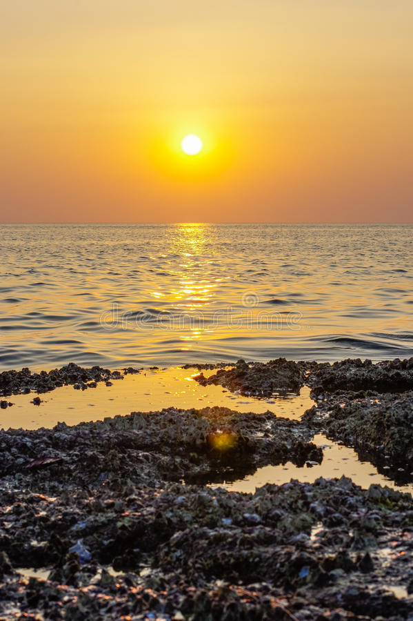 Blur colorful sunset background with shell on the rock closeup, abstract nature royalty free stock photos