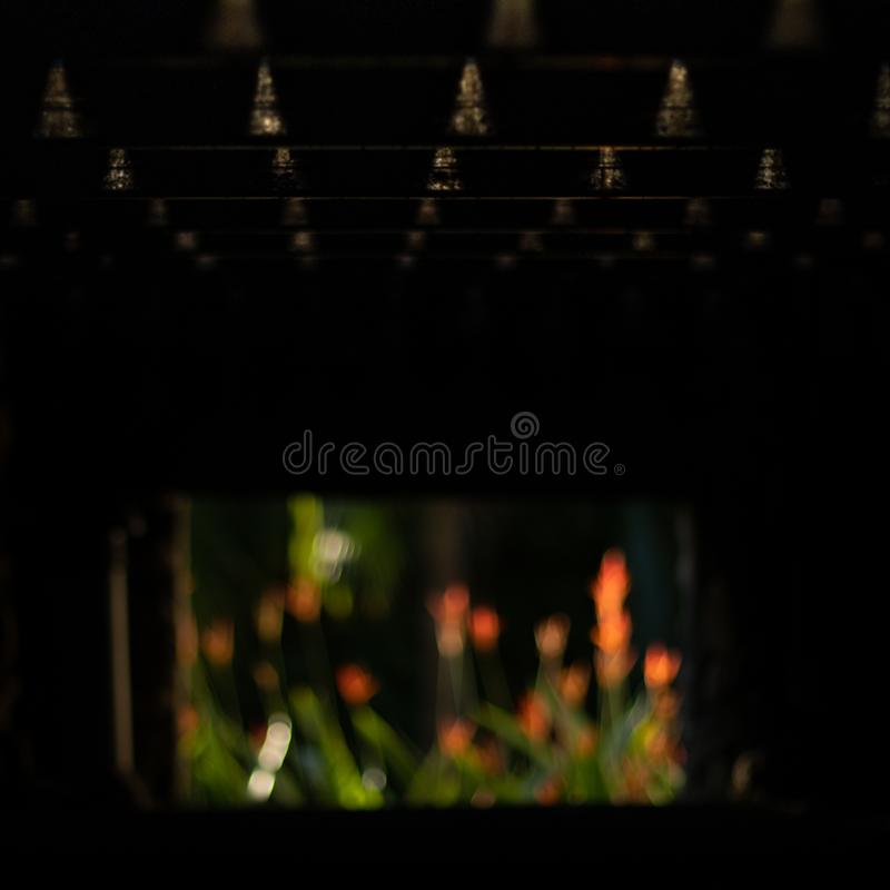 Blur flower orange green leaf black. Under ground black plant garden window royalty free stock photo