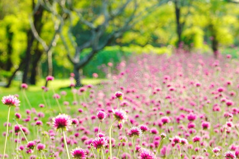 Blur focus pink fields winter fields outdoor tree flawer garden colorful green nature summer stock image