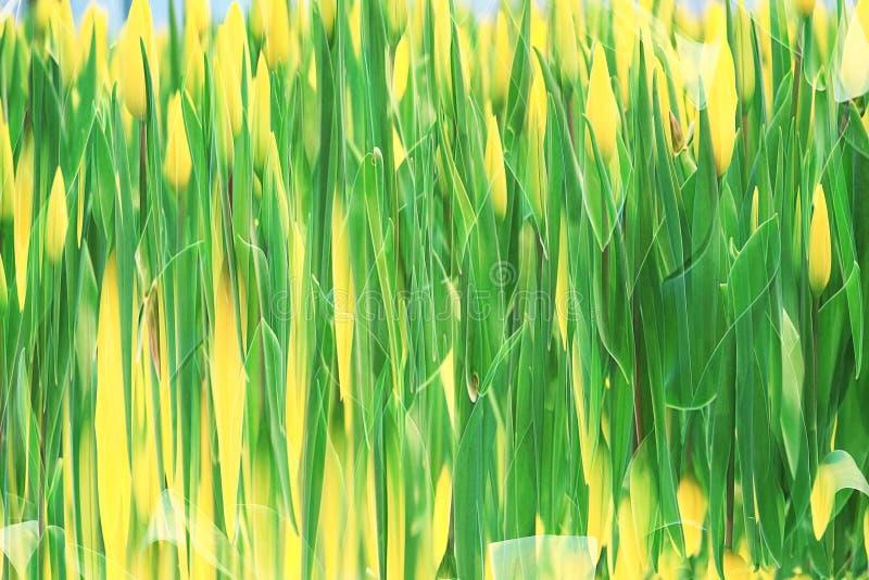 Blur fresh green spring foliage gradient royalty free stock photo