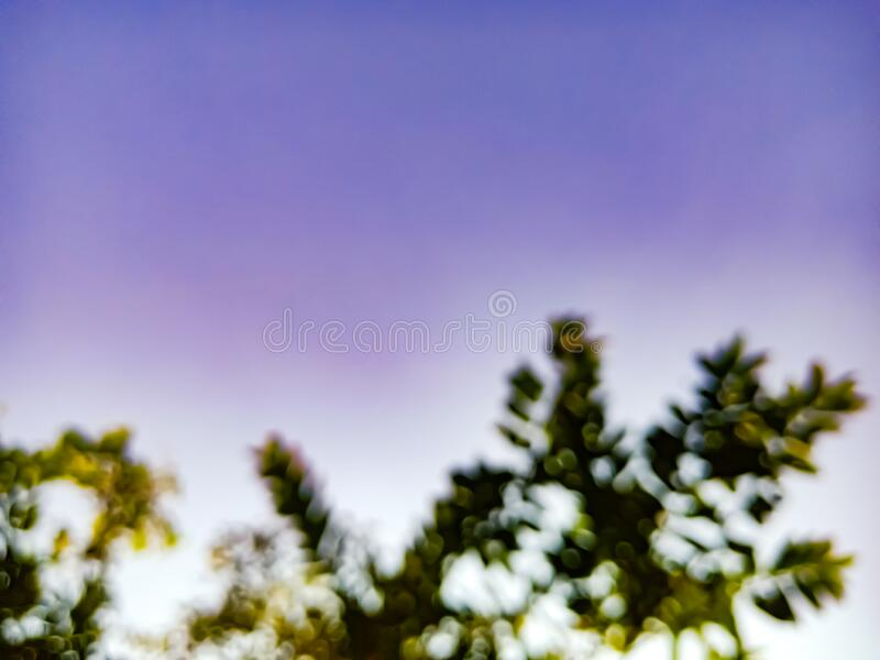 Blur fresh green tree leaves displayed on sky background royalty free stock photo