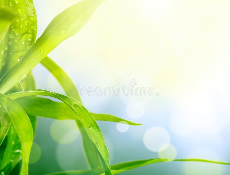 Blur green grass background. Soft blur green grass background stock images