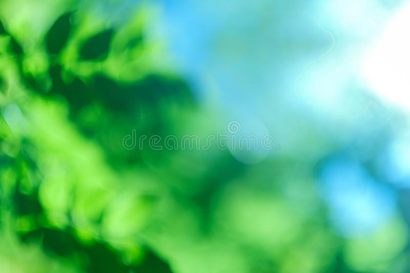 Blur green leaves blue sky nature background. Blur green leaves over blue sky. Abstract nature background. Bokeh lights effect. Copy space royalty free stock photography