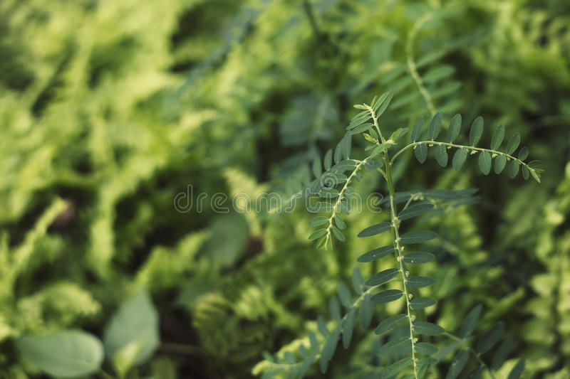 Blur green leaves with bokeh royalty free stock photography
