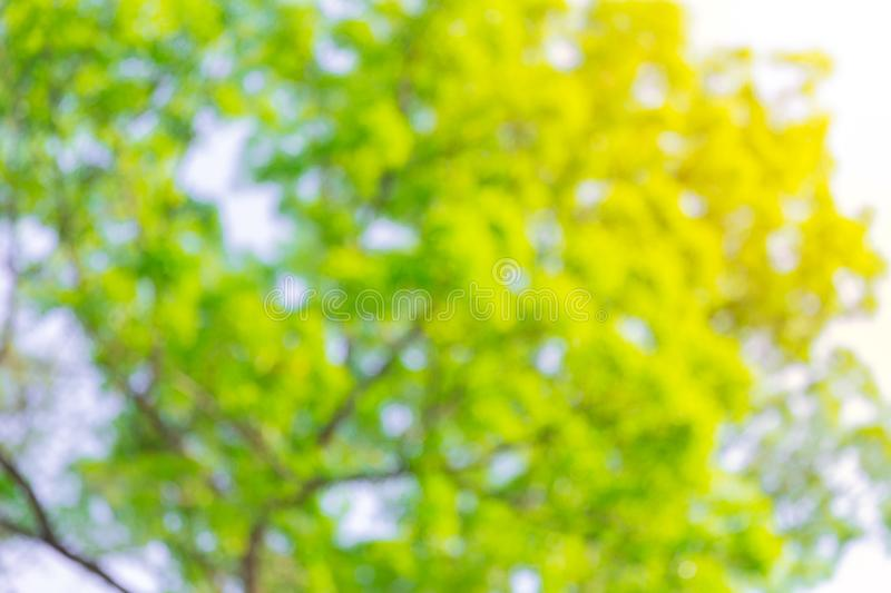 84 019 Blur Green Tree Background Photos Free Royalty Free Stock Photos From Dreamstime