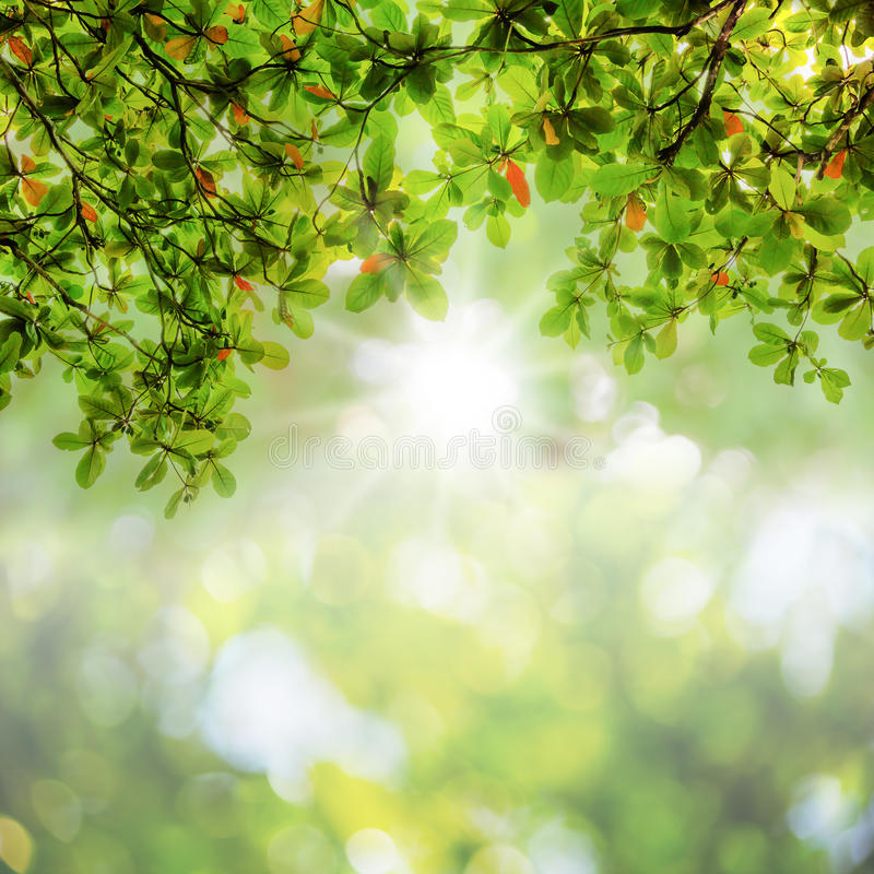 Blur leaves on abstract bokeh natrue background. Blurred green leaves on abstract bokeh natrue background royalty free stock photo