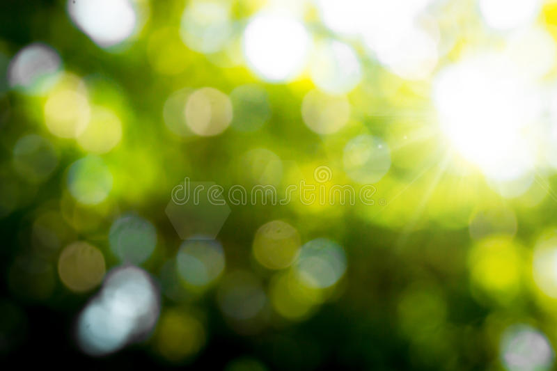 Blur of nature. With light for nature background stock images