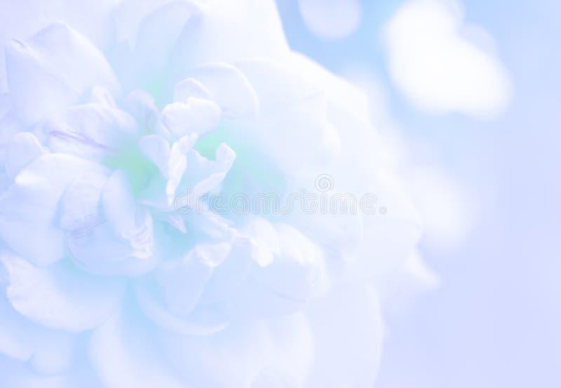 Blur photo de focused of white rose stock photo