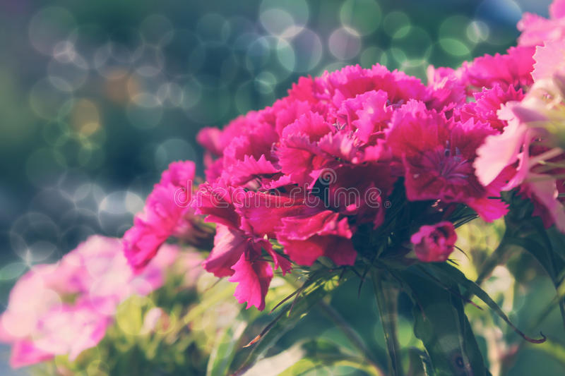 Blur spring vintage background. Blurred floral spring background picture for web and prin usage. Magical pink flower fairy royalty free stock image