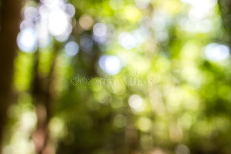 Blur tree in forest stock photography