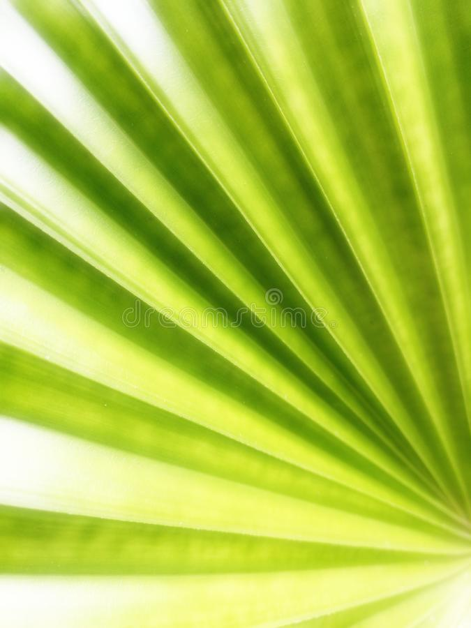 Blur tropical green palm leaf, palm leaf texture as natural background stock photos