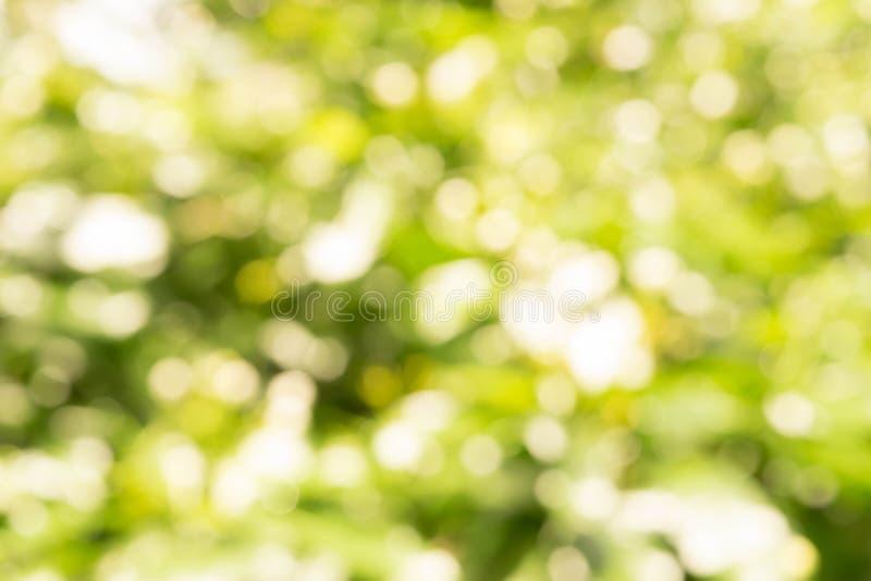 Blured Bokeh białego kwiatu i liścia lata pojęcie zdjęcie royalty free