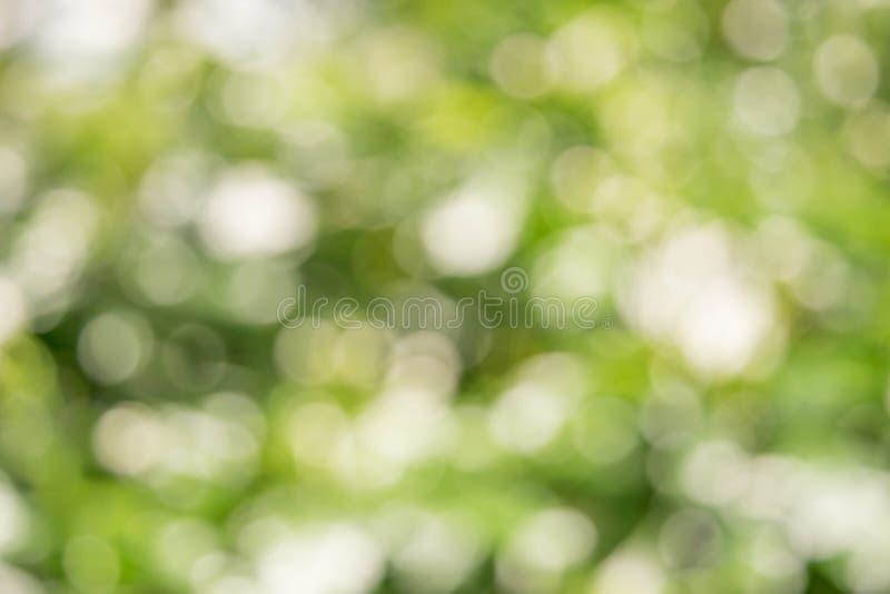 Blured Bokeh białego kwiatu i liścia lata pojęcie zdjęcia royalty free