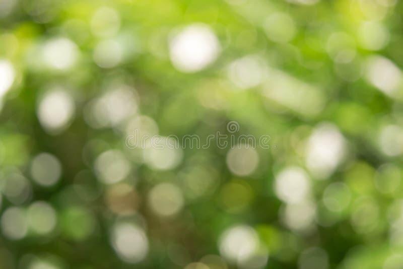 Blured Bokeh białego kwiatu i liścia lata pojęcie obrazy royalty free