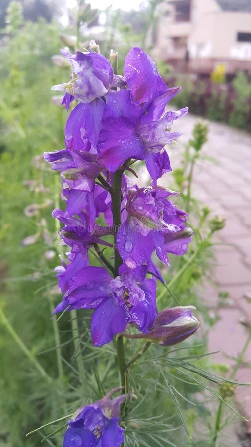blured lilor fotografering för bildbyråer