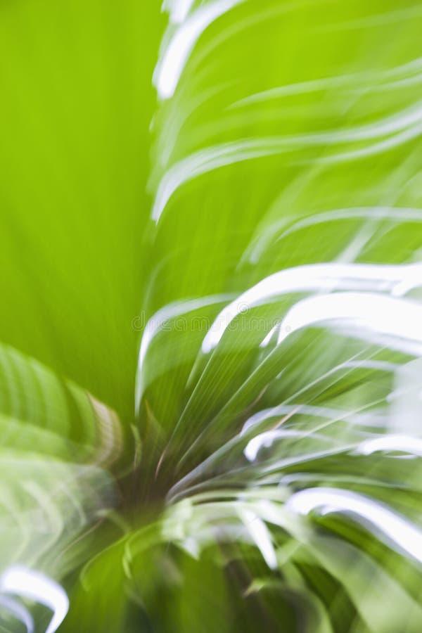 blurrörelse arkivfoton