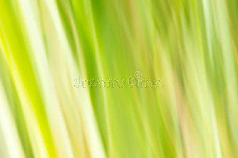 Blurred abstract background. Pastel green. Blurred abstract background. Reeds, wheat or grass concept stock image