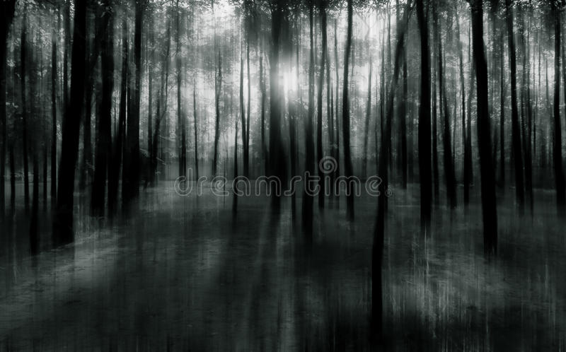 Blurred abstract background photo of natural forest with misty s royalty free stock photography