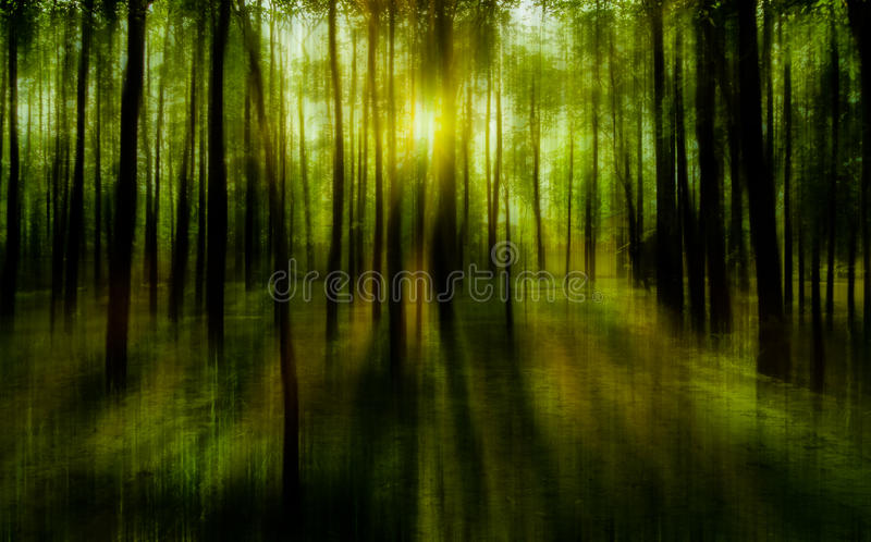 Blurred abstract background photo of natural forest with misty s royalty free stock images