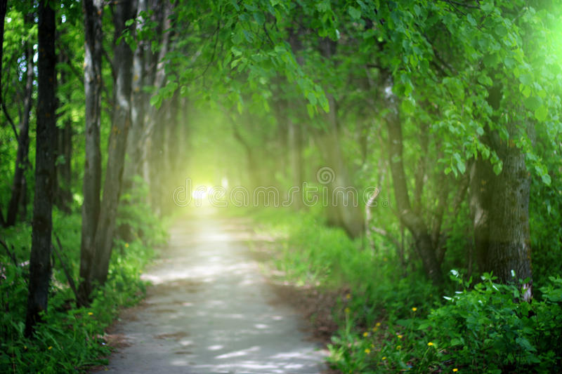 Blurred abstract green background of park alley, copy space, lens blur.  royalty free stock images
