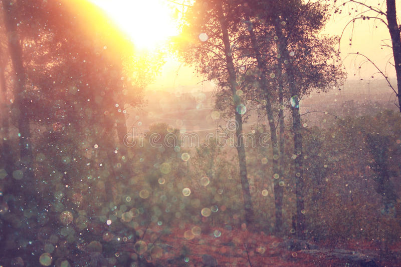 Blurred abstract photo of light burst among trees and glitter bokeh lights. filtered image and textured stock photos