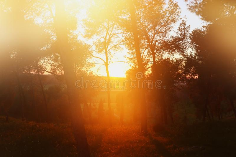 blurred abstract photo of sunset light burst among trees and bokeh stock photography