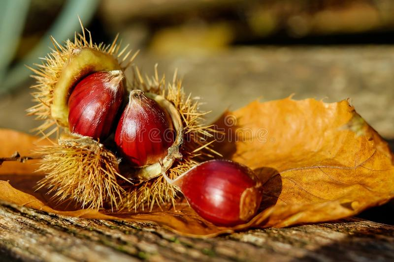 Blurred, Background, Chestnuts royalty free stock photography