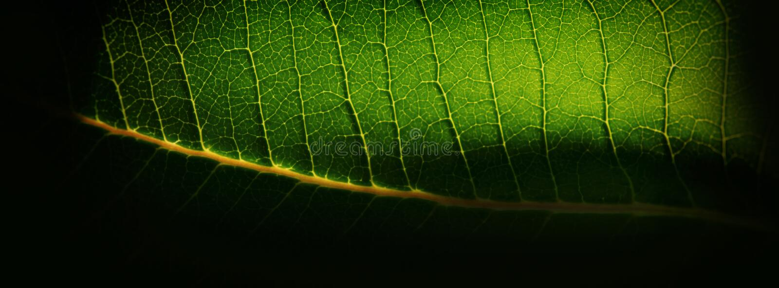 Blurred background, green plant leaf and yellow capillaries. Web royalty free stock photography