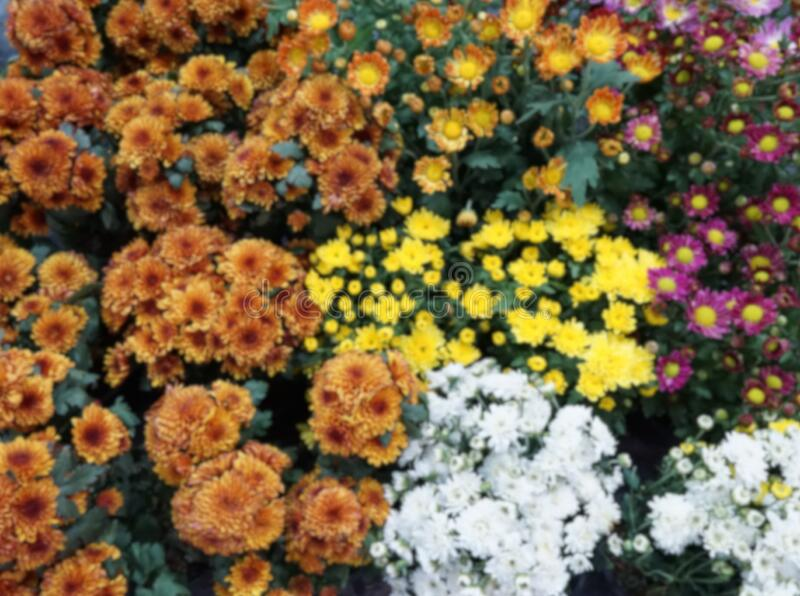 blurred background with multi color flowers. flora background stock photography