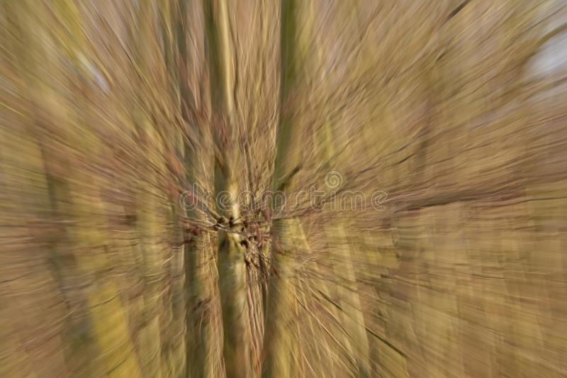 Blurred background with radial lines in brown and blurry tree trunks. Blurred background with radial lines in brown through intentional camera zomm momovement in stock photos