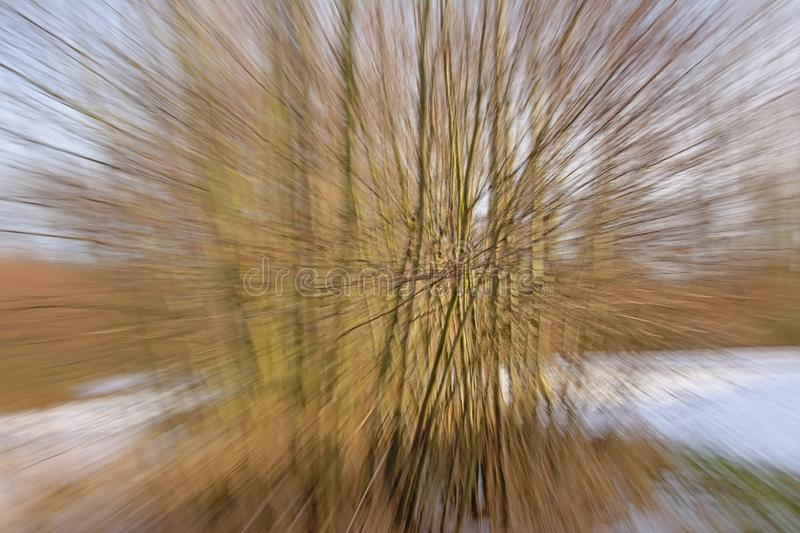 Blurred background with radial lines in brown and light blue. Through intentional camera zoom movement in a snow forest royalty free stock images
