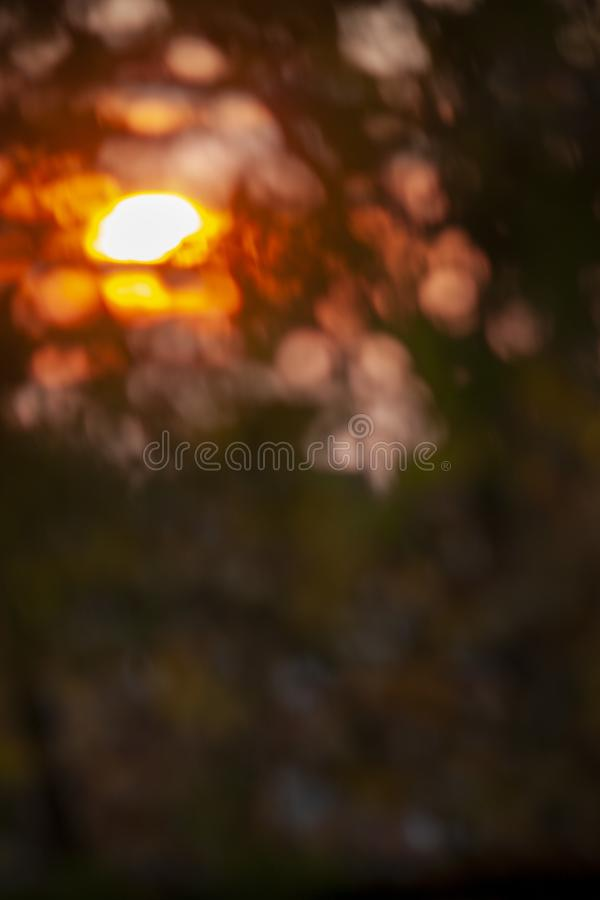 Blurred background, the rays of the evening sun through the trees, birch leaves. Blurred background , the rays of the evening sun through the trees, design stock photos