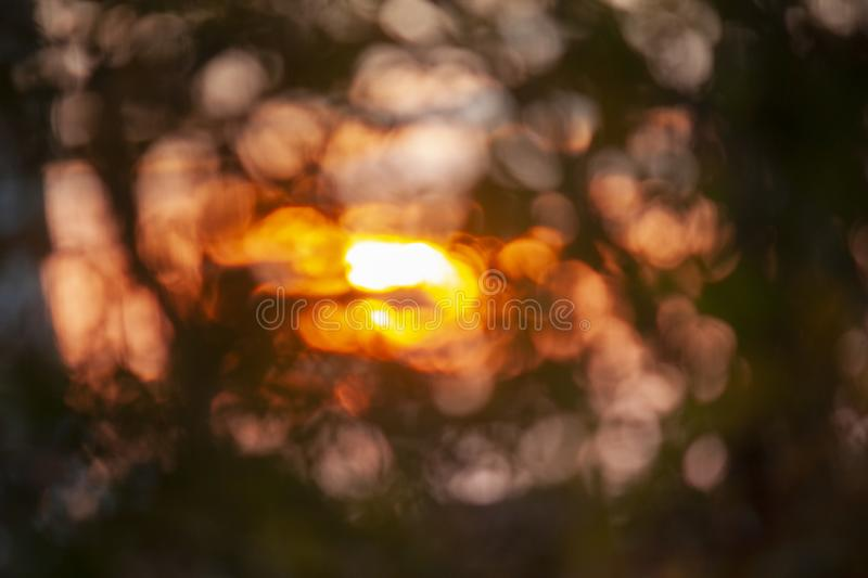 Blurred background, the rays of the evening sun through the trees, birch leaves. Blurred background , the rays of the evening sun through the trees, design royalty free stock photo