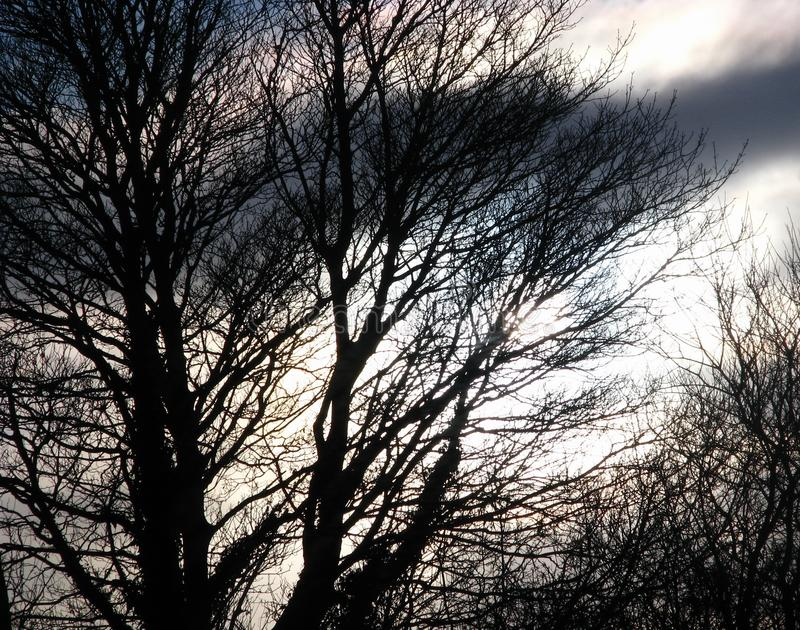 Blurred spooky background of silhouetted trees and stormy sky. Blurred background of silhouetted trees against a bright stormy grey sky at dusk in the winter royalty free stock photos