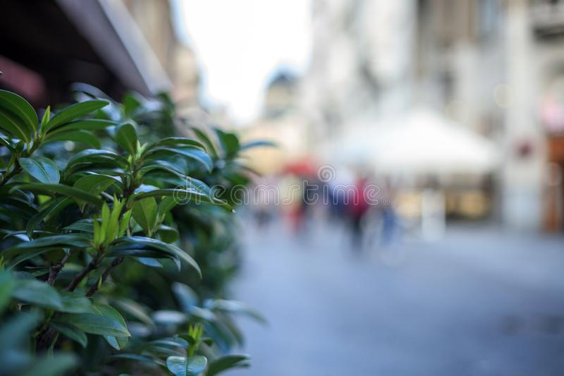 Blurred background of street and walking people stock photo