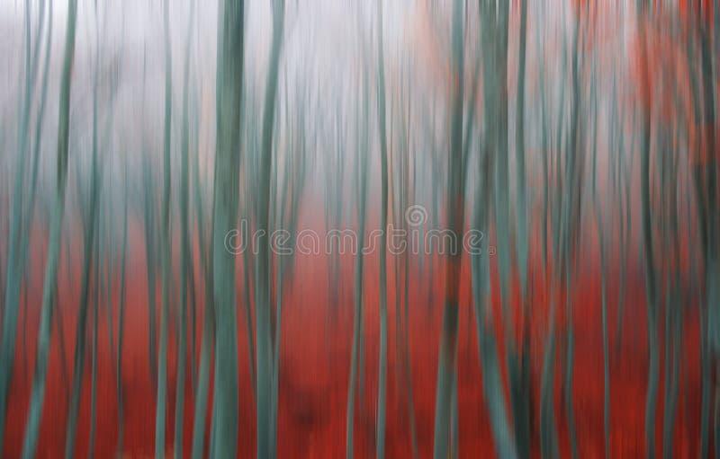 Blurred beech tree stock image