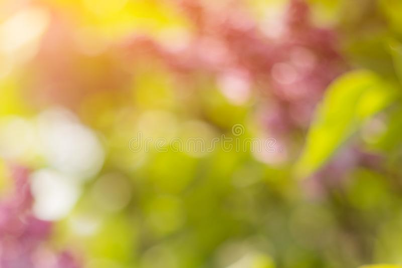 Blurred blossoming spring bright pink lilac flowers on a sunny branch, natural seasonal floral background.  stock photos