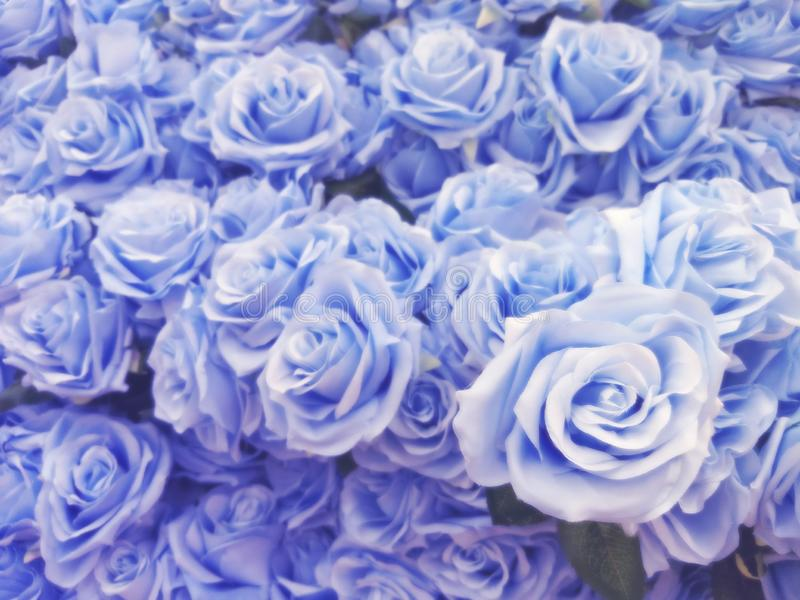 Blurred of blue roses in pastel color style on soft blur bokeh texture for background,detailof blue roses flowers treated.  stock photos
