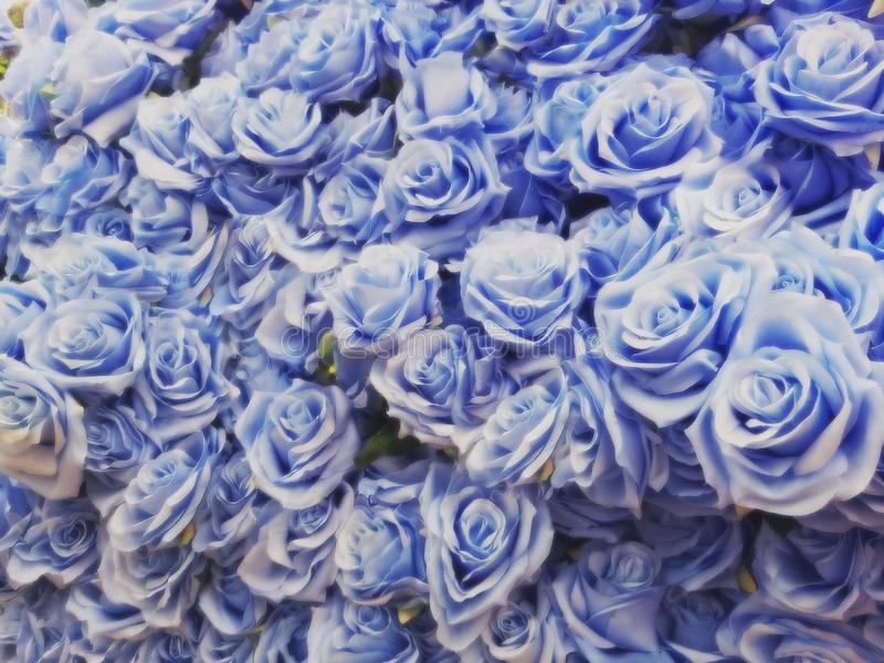 Blurred of blue roses in pastel color style on soft blur bokeh texture for background,detailof blue roses flowers treated.  stock image