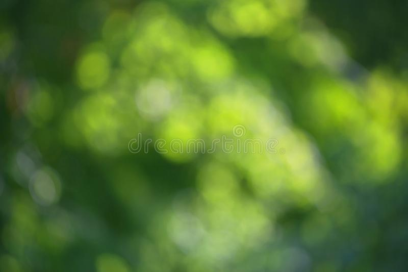 Blurred bokeh effect on a background of green tree leaves royalty free stock images