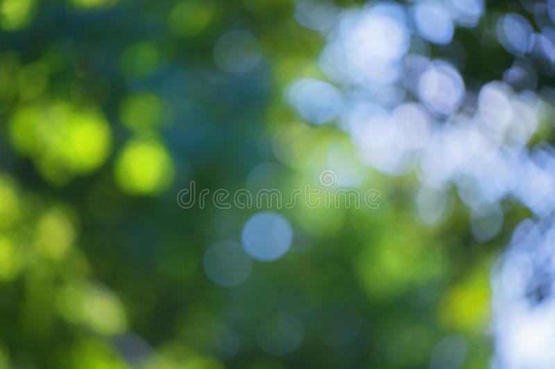 Blurred bokeh effect on a background of green tree leaves royalty free stock photo