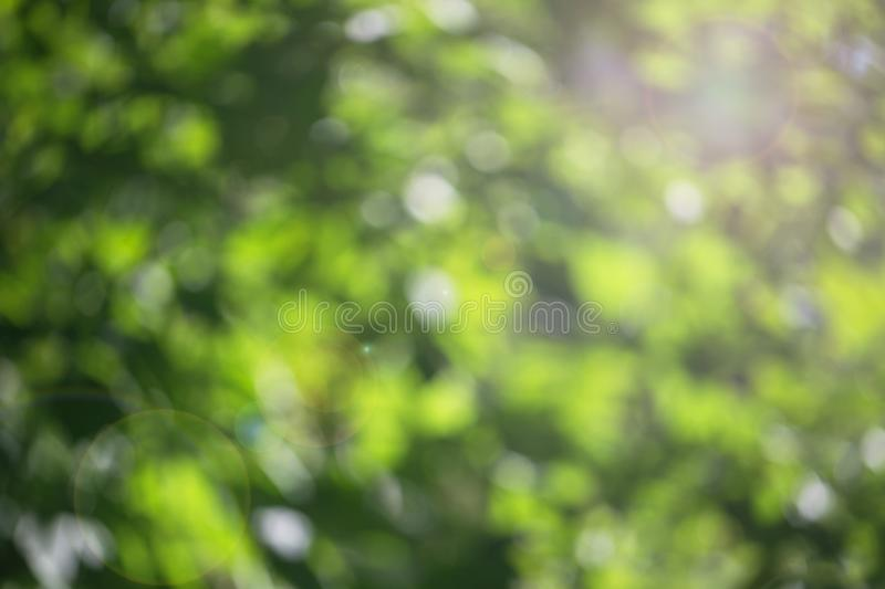 Bokeh juicy green leaves royalty free stock photography