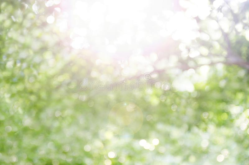 Blurred bokeh tree forest bright under light shine flare of sun for nature background wild, bokeh tree green nature abstract and stock photo