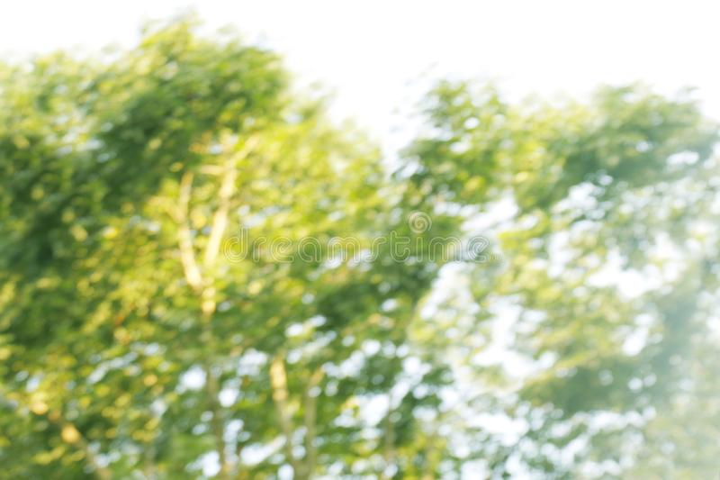 Blurred bokeh tree forest bright under light shine flare of sun for nature background wild, bokeh tree green nature abstract stock photo