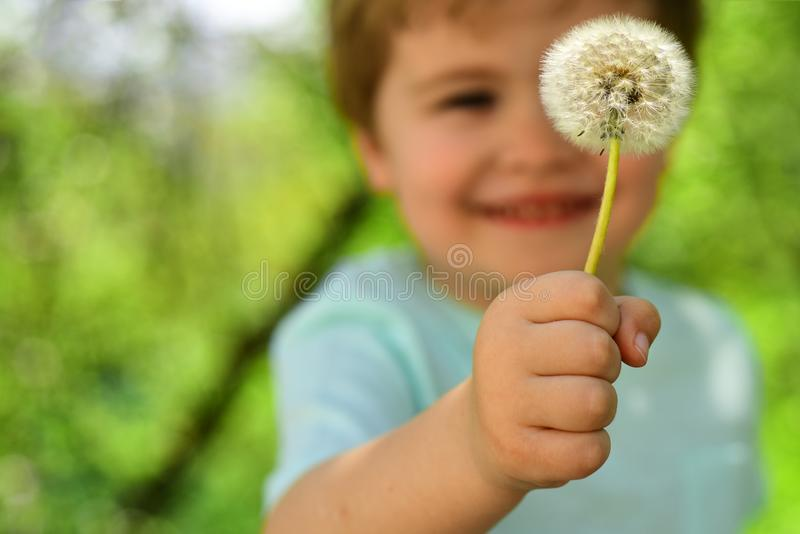 Blurred child. Little boy in forest holds one dandelion. Cute smile from child on nature. Spring and summer in the air royalty free stock images