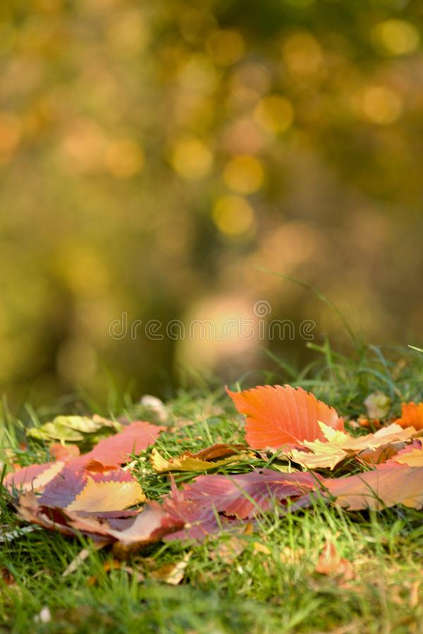 Blurred colored leaves on the grass - Bokeh royalty free stock photography