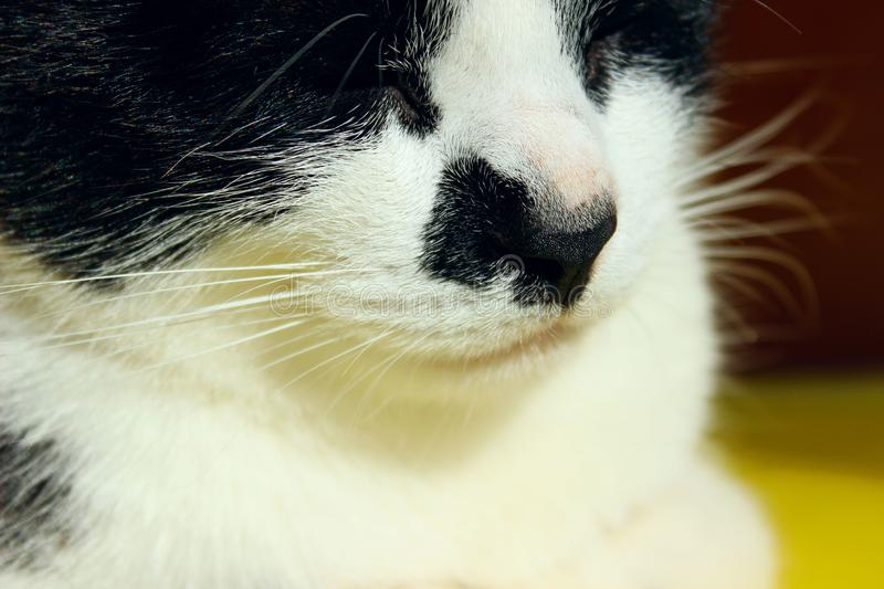 Blurred cropped shot of sleeping cat. Tuxedo cat, close up. Pets, animals concept stock photos