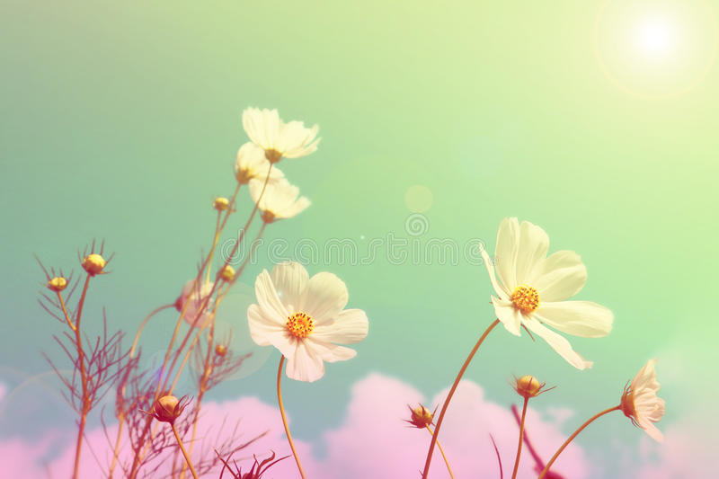 Blurred flower fields background, retro style color.  stock images